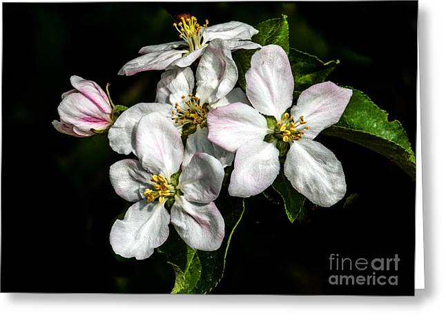 Apple Bouquet Greeting Card by Robert Bales