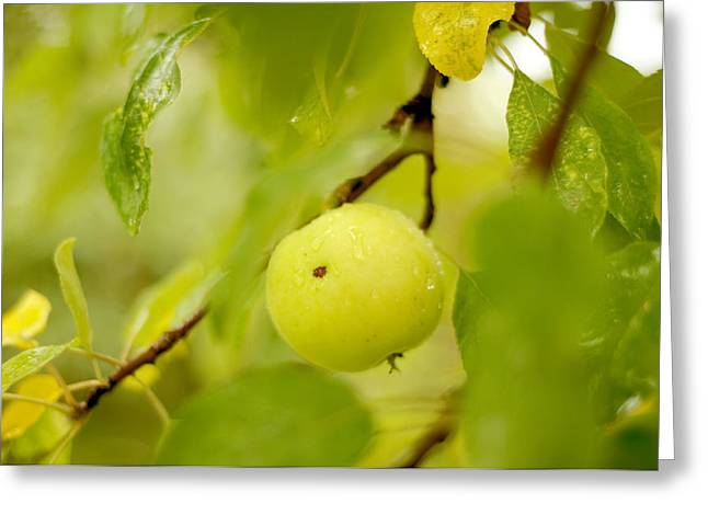 Apple Taste Of Summer Greeting Card by Jenny Rainbow