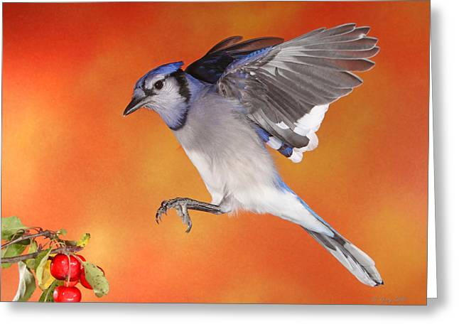 Greeting Card featuring the photograph Apple Thief by Gerry Sibell