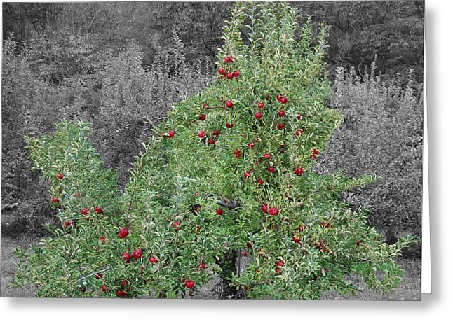 Apple Tree Greeting Card by John Small