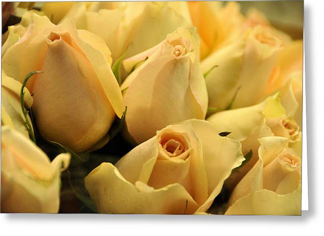Apricot Buttercreams Greeting Card by Jan Amiss Photography