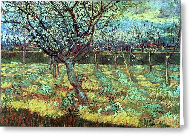 Apricot Trees In Blossom Greeting Card by Pg Reproductions