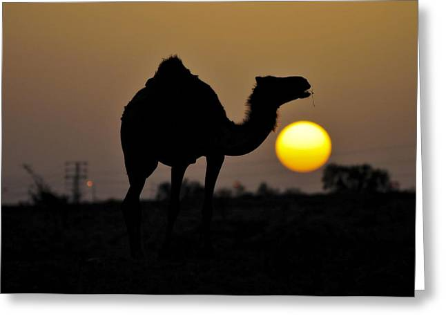 Arabian Camel Greeting Card by Photostock-israel
