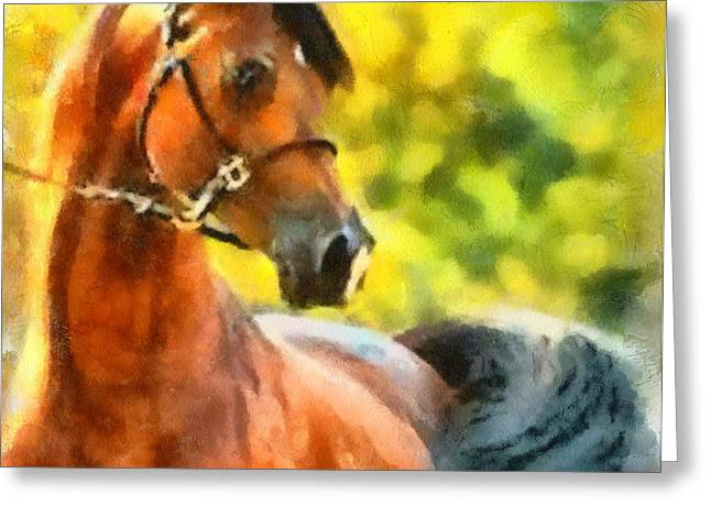 Greeting Card featuring the painting Arabian Stallion by Elizabeth Coats