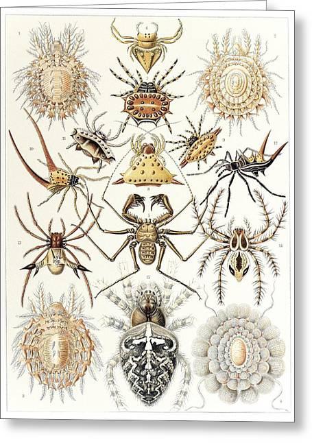 Arachnid Organisms, Artwork Greeting Card