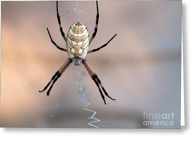 Arachnid Greeting Card