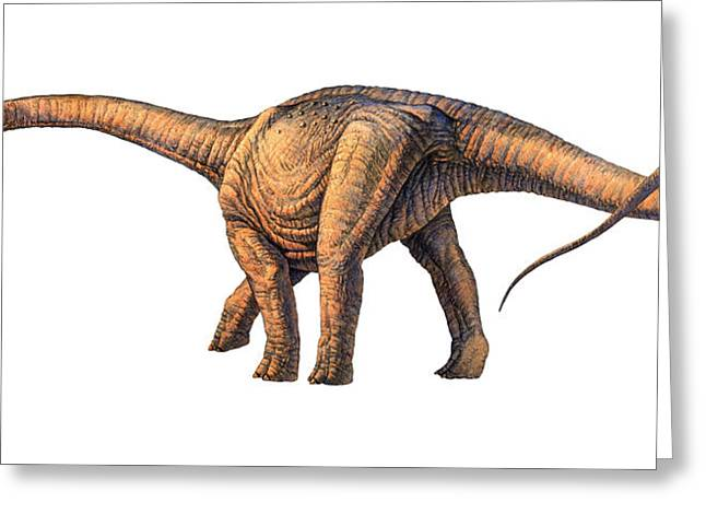 Argentinosaurus Dinosaur Greeting Card by Joe Tucciarone