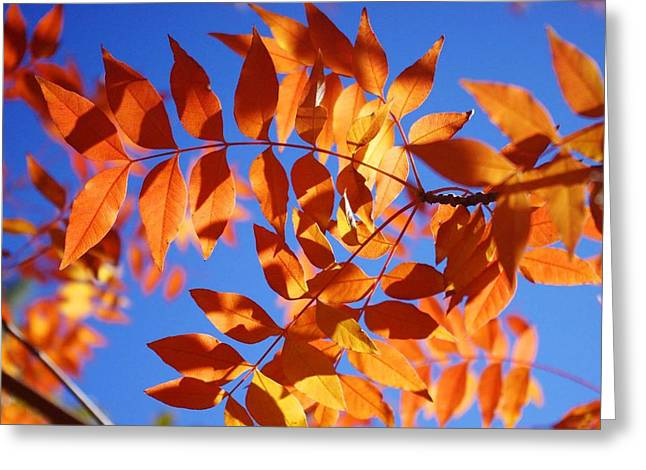 Arizona Fall 1 Greeting Card