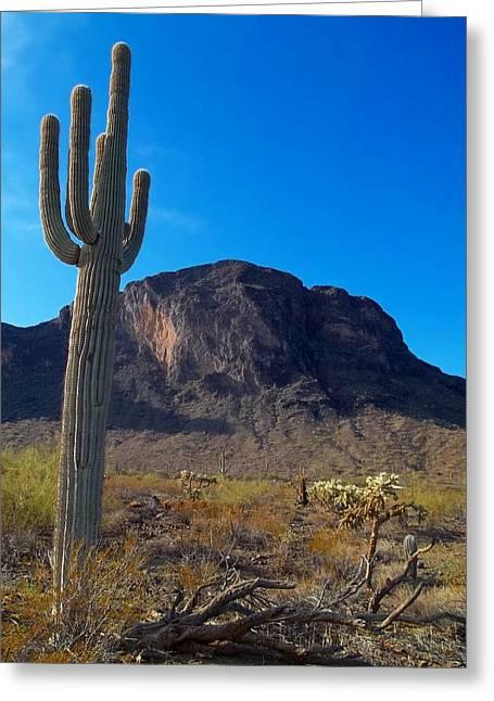 Arizona Highways - Picacho State Park Greeting Card
