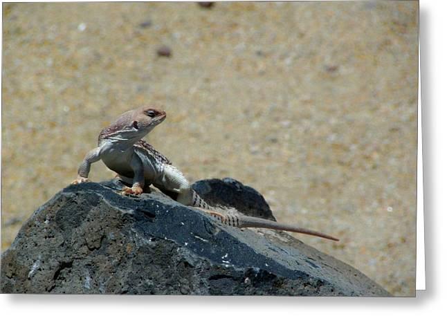Arizona Wildlife Greeting Card by Wayne Toutaint