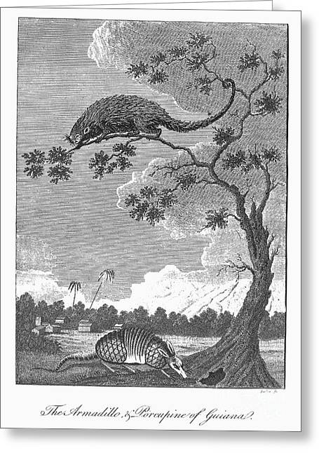 Armadillo & Porcupine, 1796 Greeting Card by Granger