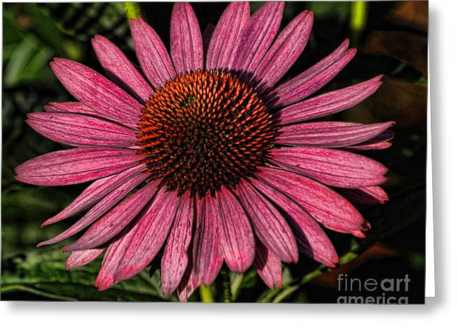 Artistic Coneflower Greeting Card by Edward Sobuta