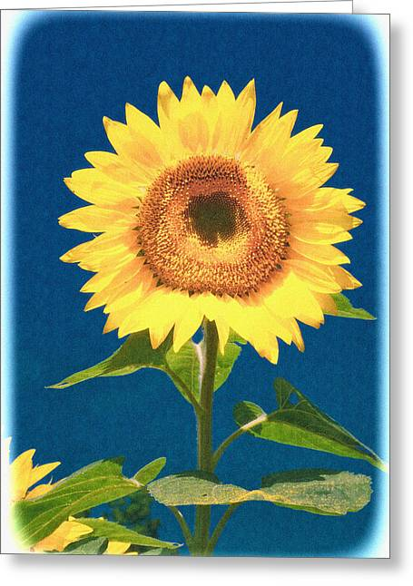 Greeting Card featuring the photograph Artsy Sunflower by Nancy De Flon