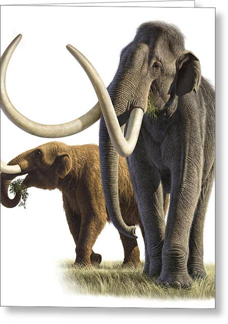 Artwork Of A Mammoth And A Mastodon Greeting Card by Raul Martin