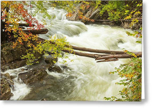 As The River Flows Greeting Card by Karol Livote