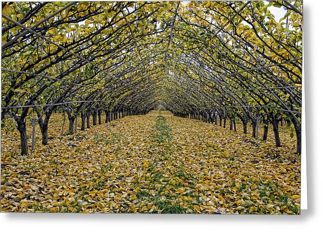 Asian Pear Trees Greeting Card