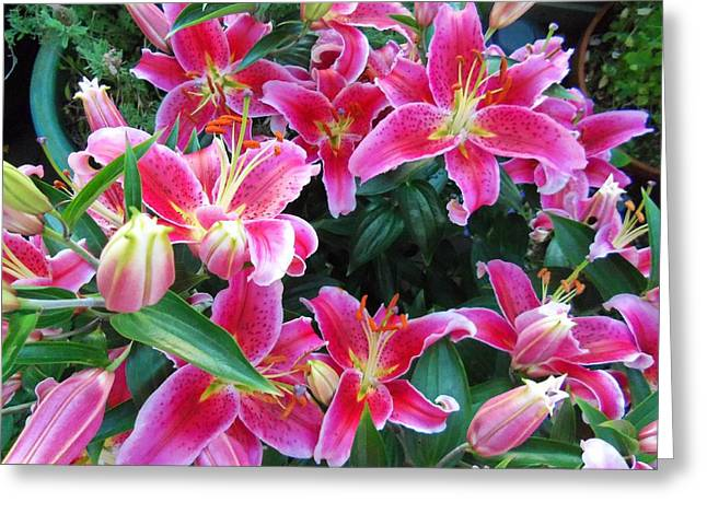 Asiatic Lillies Greeting Card by Randall Weidner