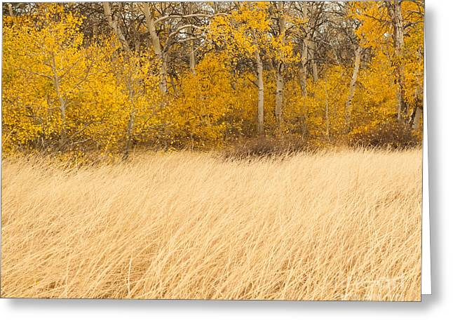 Aspen And Grass Greeting Card