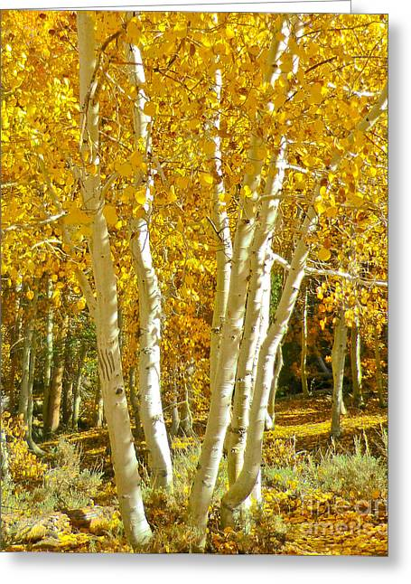 Aspen Claws Greeting Card