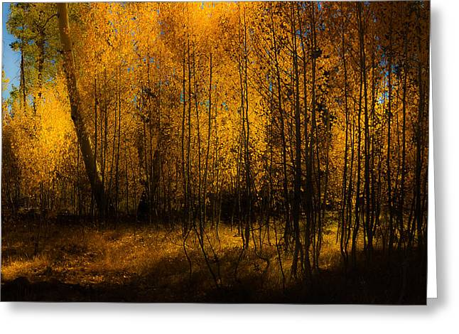 Greeting Card featuring the photograph Aspen Glow by Randy Wood