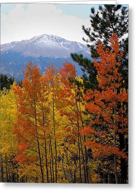 Aspen Grove And Pikes Peak Greeting Card by Kimberlee Fiedler
