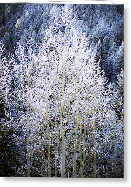 Aspen Lace Greeting Card by Beth Riser