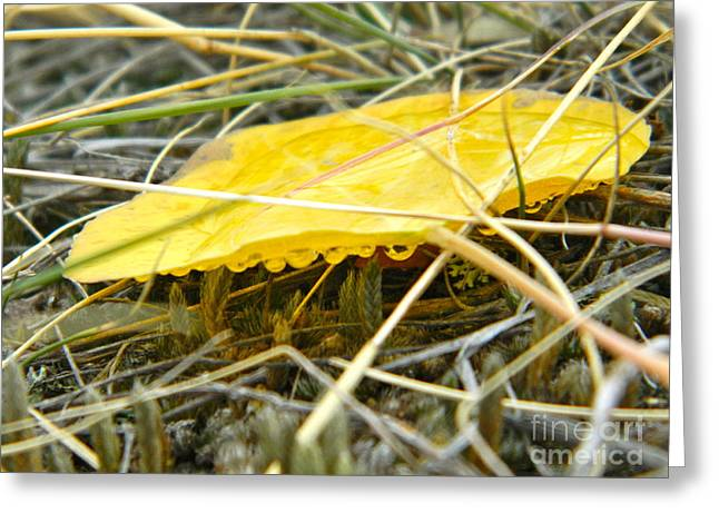 Aspen Leaf After The Rain Greeting Card by Sara  Mayer