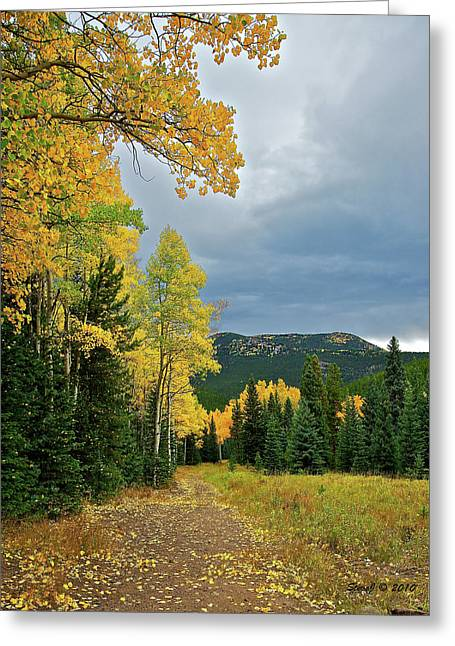 Aspen Pathway Greeting Card