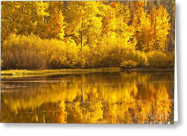 Aspen Pond Greeting Card