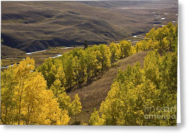 Aspen Valley Greeting Card by Timothy Johnson