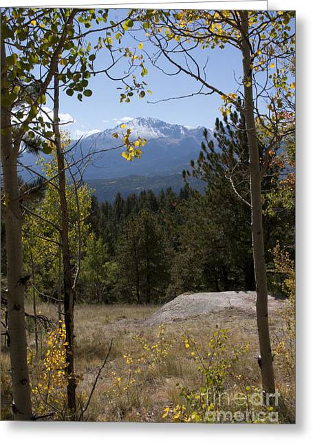 Greeting Card featuring the photograph Aspens Around Pikes Peak by Marta Alfred