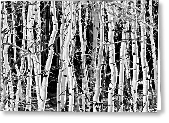 Aspens Greeting Card by Clare VanderVeen