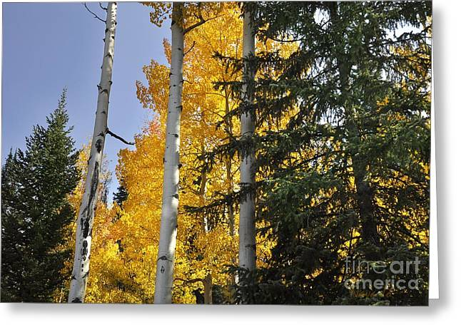 Aspens High In The Sky Greeting Card by Nava Thompson