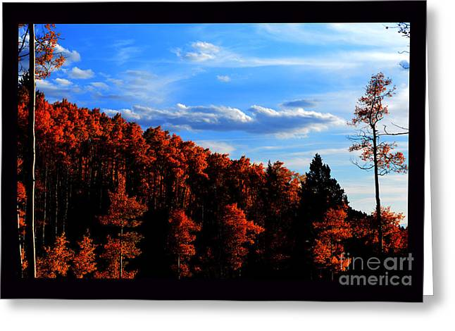 Aspens In Sunset Light Greeting Card by Susanne Still