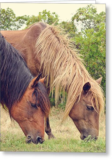 Assateague Ponies Greeting Card