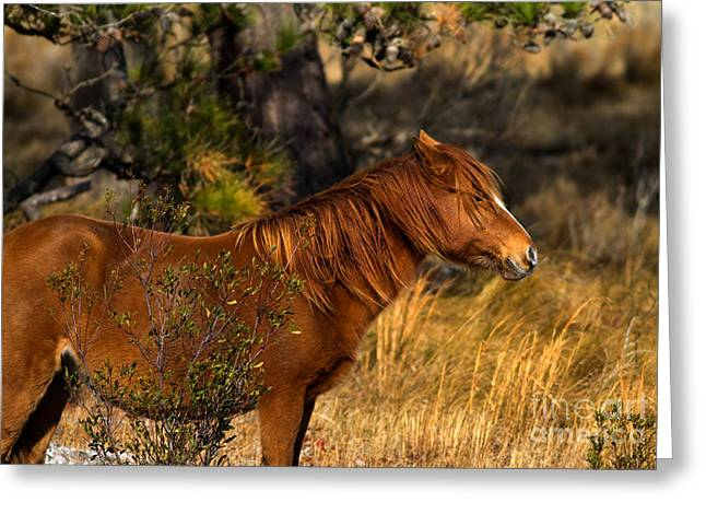 Assateague Wild Pony Greeting Card