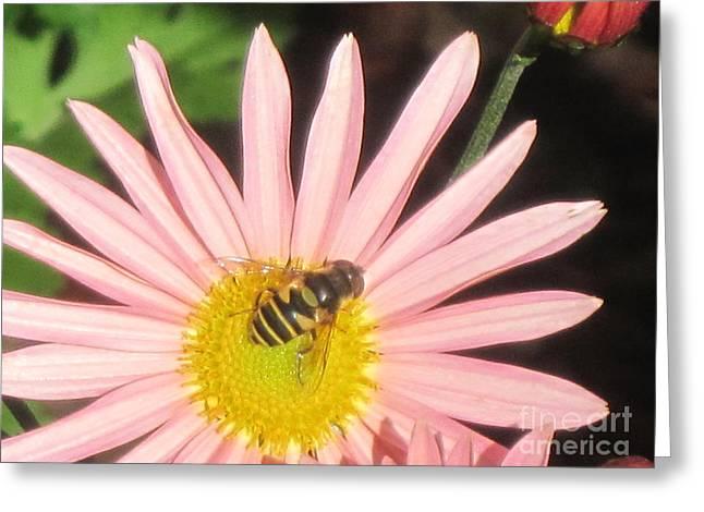 Asta With Bee Greeting Card by Barbara Milhender