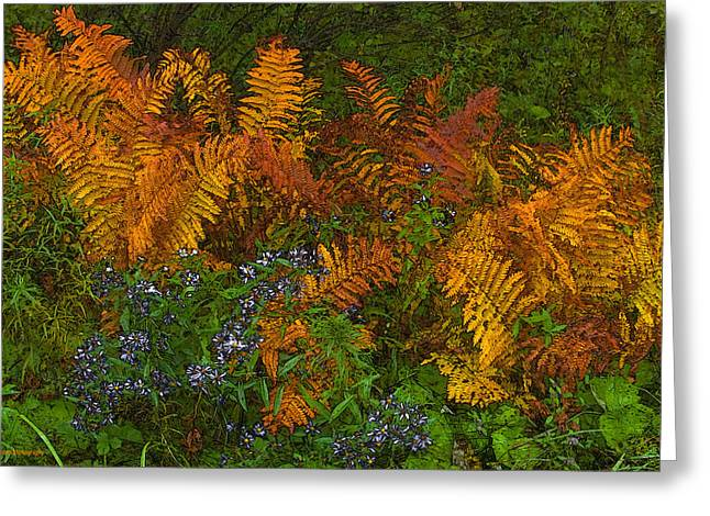 Asters And Ferns Greeting Card by Ron Jones