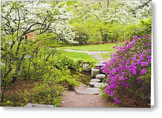 Asticou Azelea Garden In Spring Photograph Greeting Card