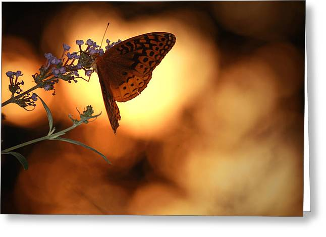 August Evening Greeting Card by Kathryn Mayhue