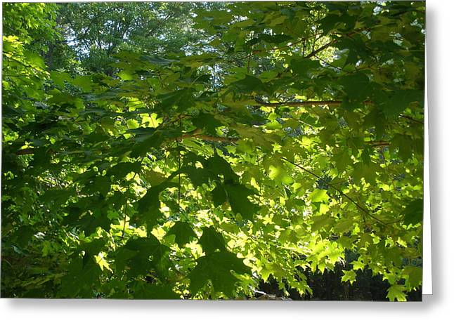 August Leaf Canopy Greeting Card by Suzanne Fenster