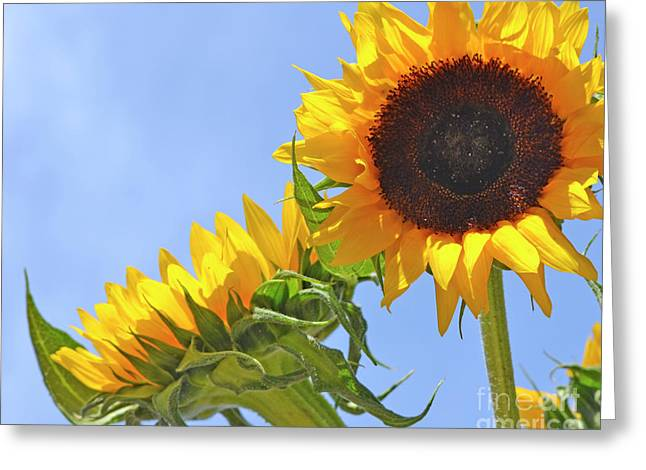August Sunshine Greeting Card