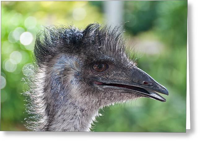 Australian Bird Greeting Card by Linda Pulvermacher