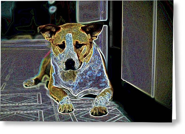 Australian Cattle Dog Boxer Mix Greeting Card by One Rude Dawg Orcutt