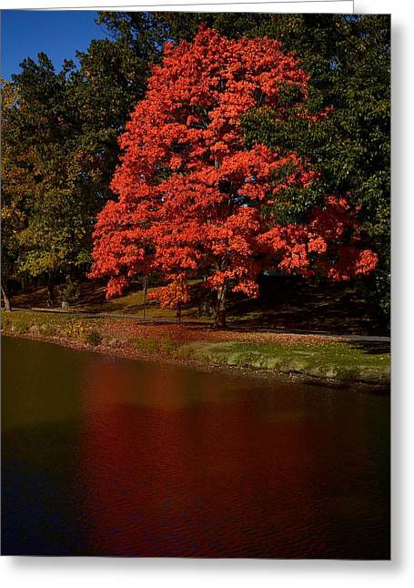 Autum Color Greeting Card