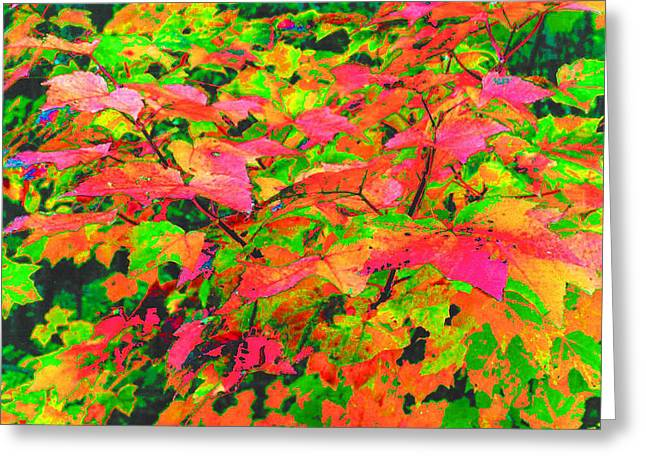 Autum Maple Leaves 3  Greeting Card by Lyle Crump