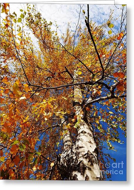 Autumn Again Greeting Card