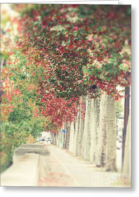 Autumn And Fall Greeting Card