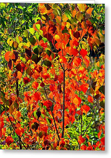Autumn Angels..... Greeting Card by Tanya Tanski