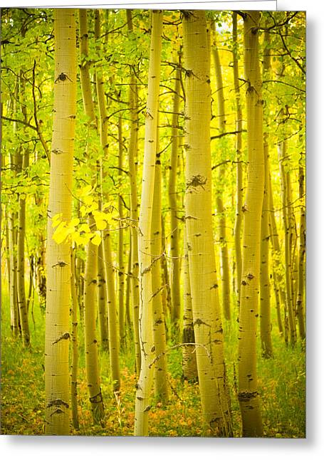 Autumn Aspens Vertical Image  Greeting Card by James BO  Insogna